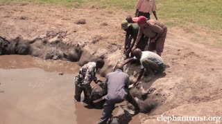 Five day old baby elephant rescued from muddy pond - Video