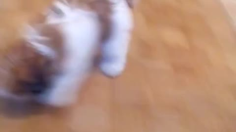 Puppy prevents house cleaning