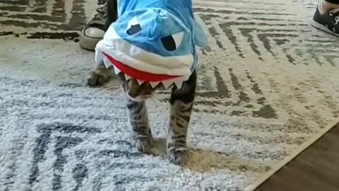 Funny cat falls over while wearing hilarious costume
