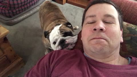 Whiny English Bulldog Rests From Nap By Napping