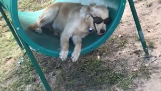 Dog With Sunglasses Chills Out In The Park
