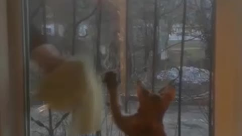 Watch funny cat washes a window.