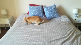 Bunny rabbit loves jumping on the bed just like humans!