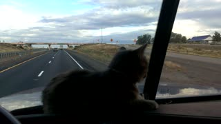Trucker cat does not like the overpass - Video