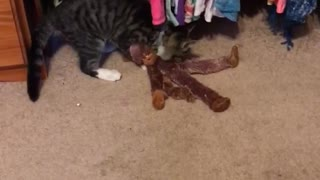 Monkey vs. kitten  - Video