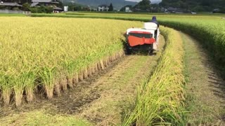 Rice harvest_in_Kobe,_Japan__Rizs_aratás_Kobe-ban__2016_09_11  - Video