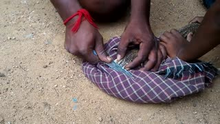 Removing Naag Mani from head of King cobra snake in india  - Video
