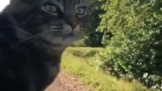 Cat sticks head out of car window just like a dog - Video