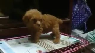 adorable puppies are interested and want to be loved - Video