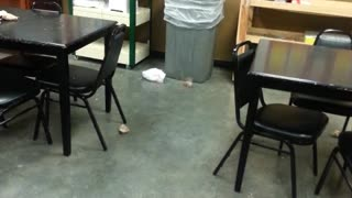 Trashcan Fail - Video