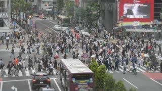 Crowded Intersection In Tokyo Makes Pedestrians Resemble Working Ants