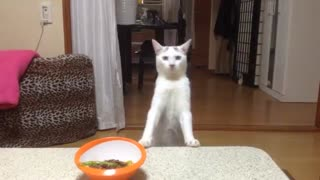 video de un gato chistoso - Video
