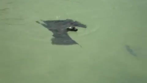 Giant Swimming Bat Confirms Our Worst Nightmares
