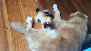 Dog and kitten share incredible bond - Video
