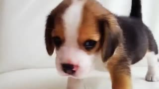 my little cute dog parks - Video