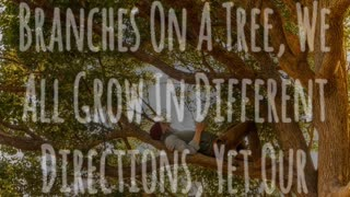 Branches On A Tree - Video
