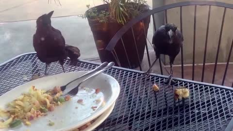 Funny bird tosses food container off table