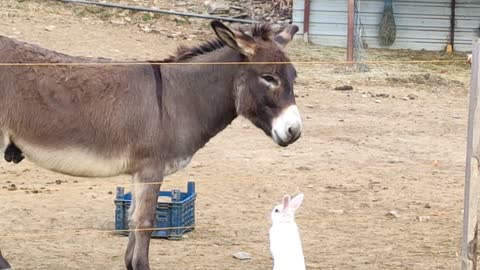 Donkey hangs out with his bunny best friend