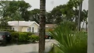Hurricane Irma Rips Tree From Ground - Video