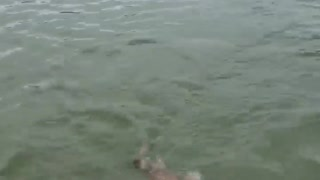 My dog swimming in the sea  - Video