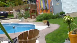 Cat pushes rival in pool - Video