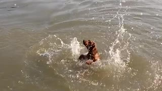Dog's first swim is surprisingly hilarious - Video