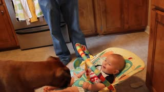 Baby laughing at dog eating bubbles - Video