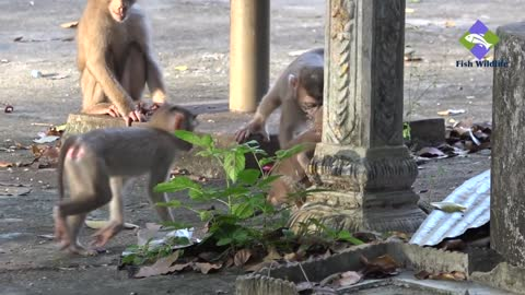 Monkeys live in an open deserted place