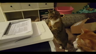 A Family Of Cats Is Fascinated By A Copy Machine - Video