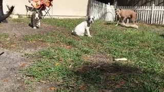 Super cute Puppies running in slow motion  - Video