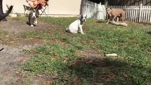 Super cute Puppies running in slow motion