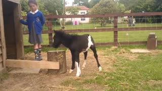 (VIDEO) Annoying Toddler and Cute Foal!