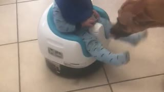 Baby Boy Rides A Roomba Around The Kitchen - Video