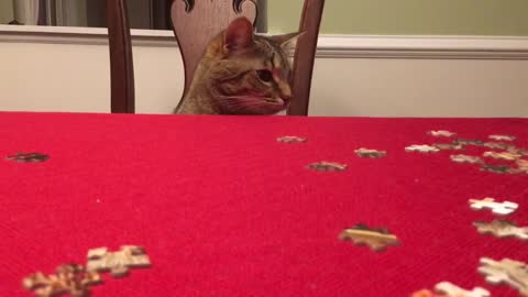 Curious Cat Runs Off With Random Puzzle Piece
