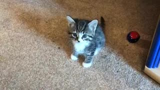 Kitten arguing with owner  - Video