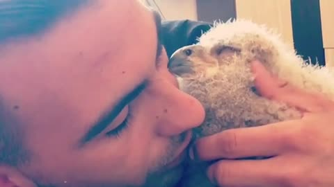 Baby Owl Preciously Cuddles With Its Owner