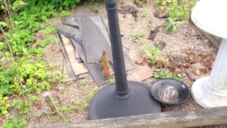 Squirrel stealing nuts from bird feeder