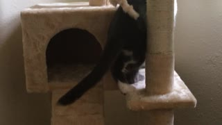 Our New Rescue Cat Checks Out Her New Tower - Video