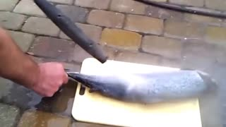 How to clean fish remove scales in seconds - pressure washer - Video