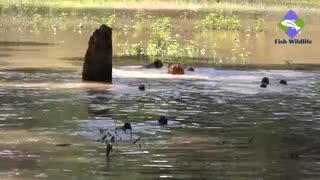 Monkeys Playing in Rainy Water