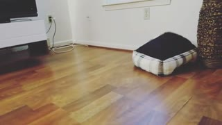 LOOK THE PUPPY'S BED IS HAUNTED! - Video