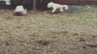 Poodle faceplant garage backyard - Video