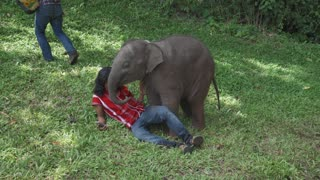 Baby Elephant Cuddles Overjoyed Travellers
