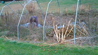 RemovingThe Old Hoop House