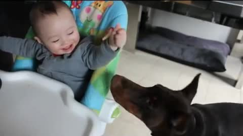 Baby shares his food with Doberman
