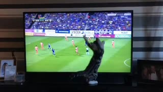 Cat Watching Football Game