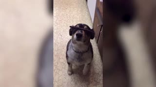 Feeling Pity Towards This Dog :( - Video