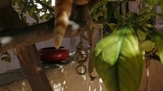 My lovely cat is climbing the tree
