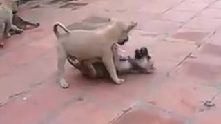Cute dogs frolicking