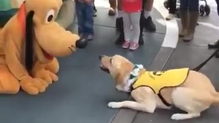 Service Dog Has Priceless Reaction After Meeting Pluto At Disneyland - Video